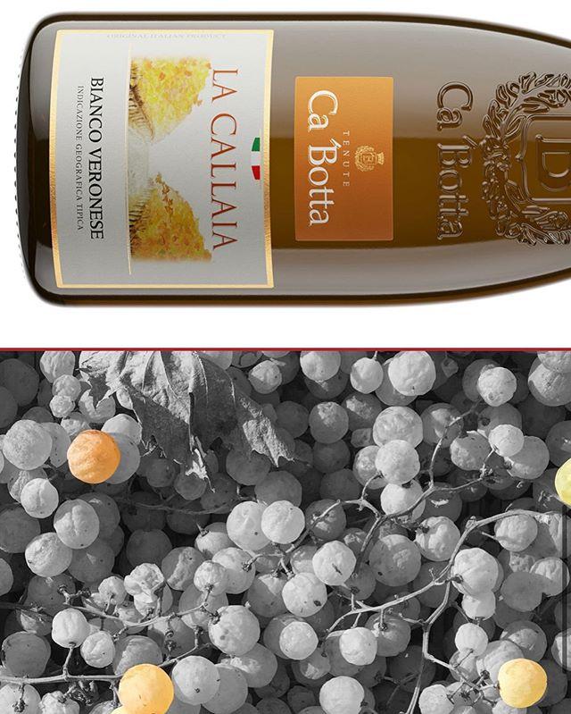 Специальное концептуальное белое сухое вино, произведенное только из вяленного винограда с длительной мацерацией и очень медленной ферментацией на осадке. Это белое вино с особо плотным телом не имеет аналогов в мировом виноделии, так как никто кроме Tenute Ca' Botta не работает с вяленым рислингом.  Особенности напитка Специальное белое сухое вино, изготовленное как и легендарное Amarone DOCG из вяленого винограда. Разница состоит лишь в ферментации по-белому, без мезги, как и большинство белых вин. Густое полнотелое вино соломенно-желтого, очень приятного цвета. Вино имеет сложную, элегантную и гармоничную структуру, аромат начинается с нот персика, груши, желтого яблока, экзотических фруктов и ванили, за которыми следуют запахи хлебной корочки и цветов.  Мягкий и минеральный вкус. Яркая и приятно выраженная кислотность отлично сбалансирована сладковатым послевкусием с нотами сухофруктов. Алкоголь не чувствуется. Он нужен для будущей длительной выдержки в течение 15-20 лет.  С чем подавать La Callaia Bianco Veronese IGT легко пьется и не кажется крепким, это вино прекрасно выступит в паре со свежими морепродуктами и морской рыбой. Тягучая плотность этого концептуального вина отлично насытит вас без еды, так что сопровождение не обязательно.  Награды Luca Maroni (Италия) — 93/100.