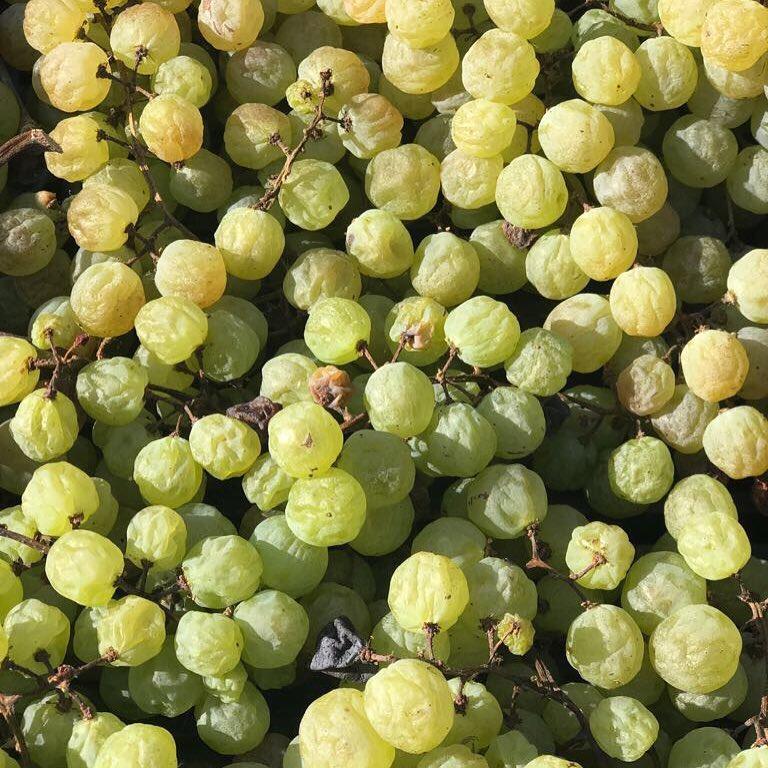 Каботта создаёт белые вина по рецепту Амароне. Вяленыйвиноград и ферментация в декабре — главные условия для производства отличных  полнотелых белых вин