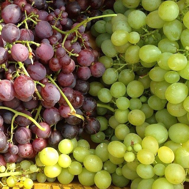 #tbt #урожай2017 Столовые сорта винограда Ca'Botta не идут на изготовление вин. Они идут прямиком на стол! Хорошего воскресенья!