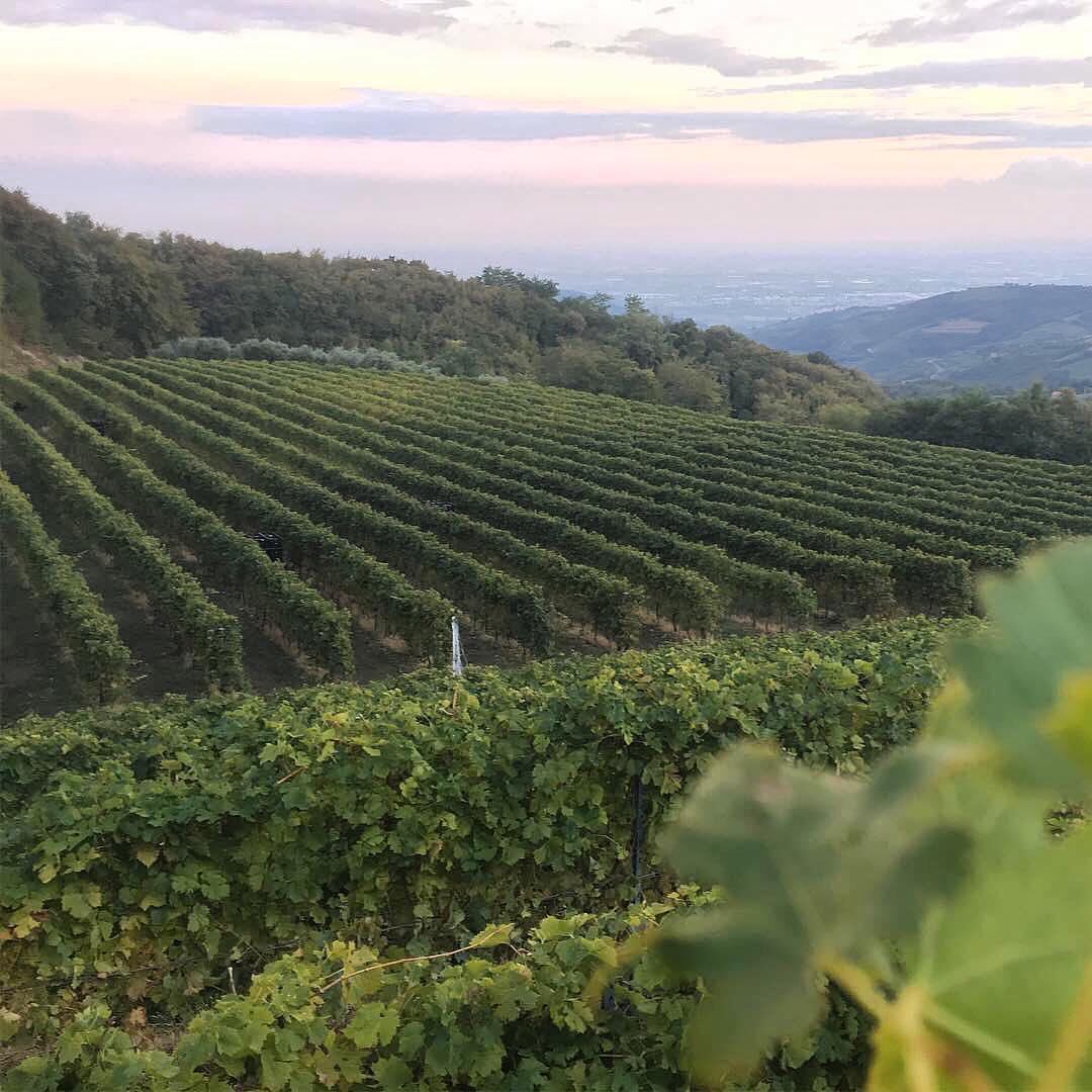 Великое вино — это то вино,  которое приносит большое удовольствие в тот самый момент, когда его пьёшь — с утверждением полностью согласны. Награды, признание — всё это хорошо и приятно, но самое главное в винах Ca'Botta — удовольствие от процесса. Пробовать, смаковать, наслаждаться — обязательно? #незарулем