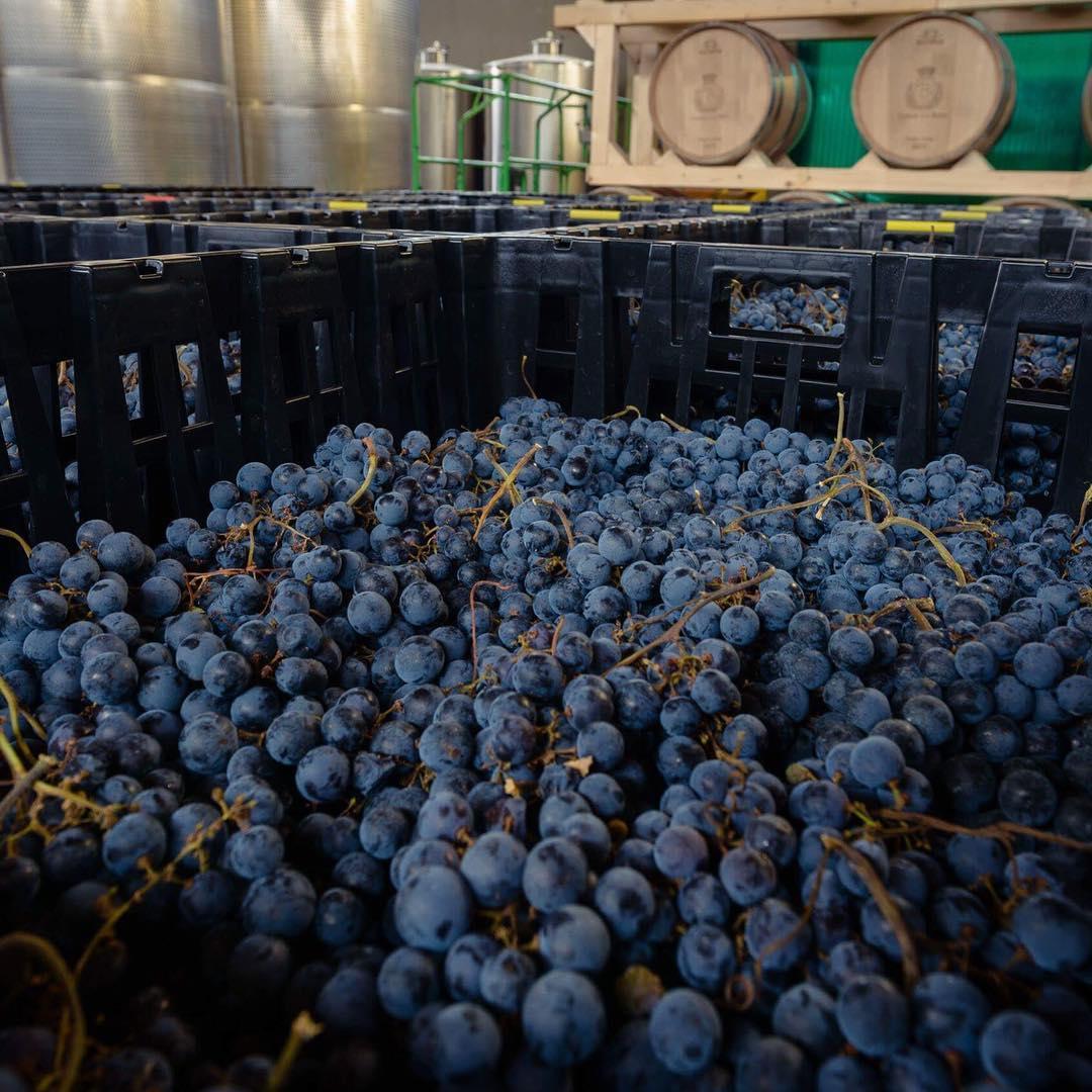 Терруар (фр. Terroir) – это совокупность всех факторов виноделия какой-либо местности, которые определяют букет и потенциал вина перед его выдержкой.  Существует два противоположных мнения: кто-то утверждает, что только великий терруар способен давать миру великие вина, другие считают, что терруар, в принципе, не особо влияет на конечный продукт. На винодельне CA'BOTTA придерживаются мнения золотой середины: при создании вина мы  учитываем и особенности терруара, и, конечно же, постоянно совершенствуем технологии производства. Мы считаем, что великое вино можно создать только на хорошем винограднике. Без ухоженного, с любовью выращенного виноградника, даже самый великий винодел может потерпеть неудачу.