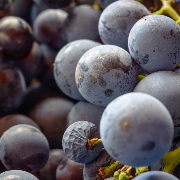 Корвина — автохтонный сорт винограда Венето. Анализ ДНК показал, что при завяливании Корвина не только теряет жидкость, но и активизирует уникальные гены — именно в результате этого биологического процесса появляются характерные ароматы. Сортовые вина из Корвины имеют насыщенный рубиновый цвет, они полнотелые и богаты элегантными ароматами?