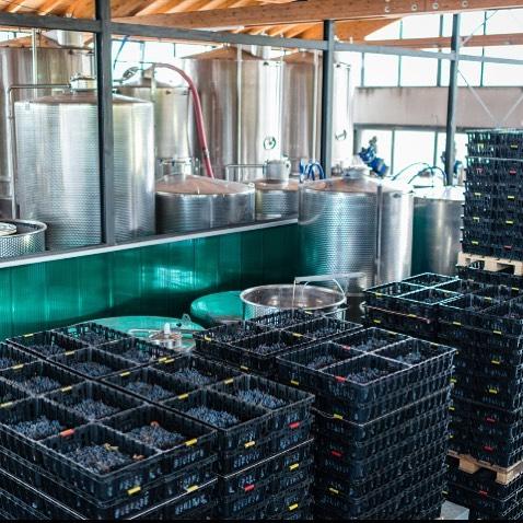 Только натуральная ферментация — по этому принципу создаются вина на винодельне Ca'Botta. Интересный факт: обычно для производства одной бутылки вина используется около 500-650 ягод винограда. А для вин Каботта расход свежего винограда и того больше: наример, бутылка Амароне содержит 2,2 кг свежих ягод, а Вальполичелла Рипассо 1,8 кг… Как насчёт винограда на ужин?